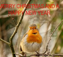 A ROBIN FOR XMAS by andysax