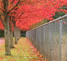 Pacific Northwest beauty line-up by Rainydayphotos