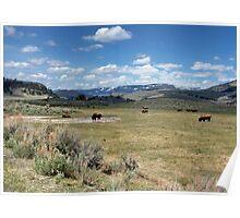 Where the Buffalo Roam,  Poster