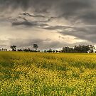 Blooming Good Time - Bathurst NSW Australia - The HDR Experience by Philip Johnson