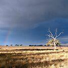 Stormy Sky by aussiecreatures