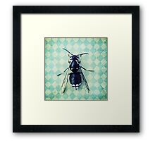 The hornet Framed Print