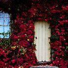 Secret Garden by Natalie Ord