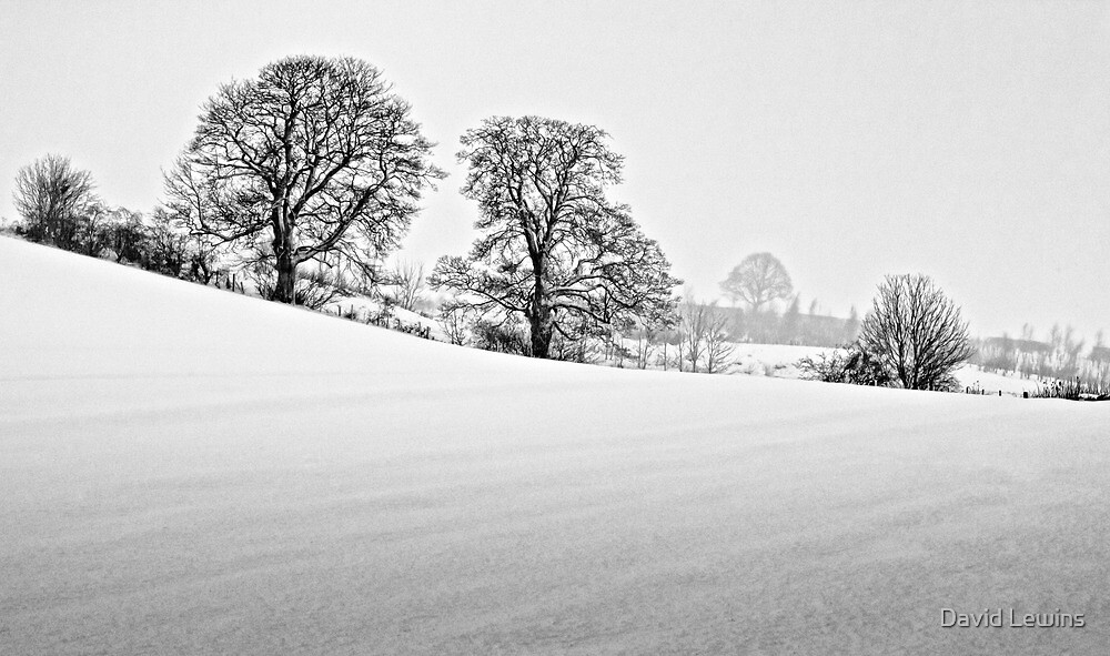 Winter Trees, County Durham. UK by David Lewins