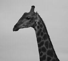 Giraffe by sarahchamlee