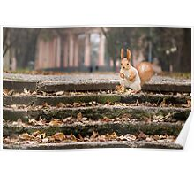 Cute squirrel in autumn forest. Casual meeting Poster