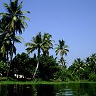 Backwaters in Kerala by Vandana Indramohan