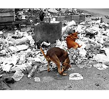 West Dump Street Dogs Photographic Print