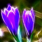 Sparkling Crocus by Trevor Kersley