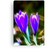 Sparkling Crocus Canvas Print