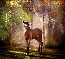 Foal in the woods by Nicky Stewart