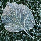 Frosty Leaf by John Gaffen