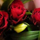 *Three beautiful Red Roses* by EdsMum
