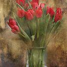 Tulips by Kimberly Palmer