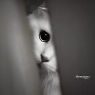 Peepin TomCat by ibjennyjenny