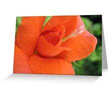 Zesty Rose Greeting Card