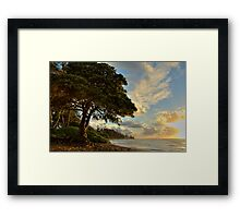 Mighty Beach Tree Framed Print