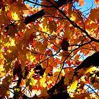 Autumn Flames of Color by John Carpenter