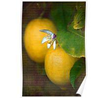 Sweet Lemon Poster