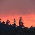 Smoke Trail Sunset by BettyEDuncan