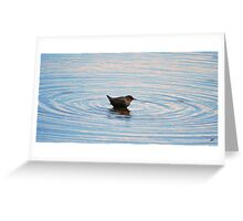 little dipper Greeting Card