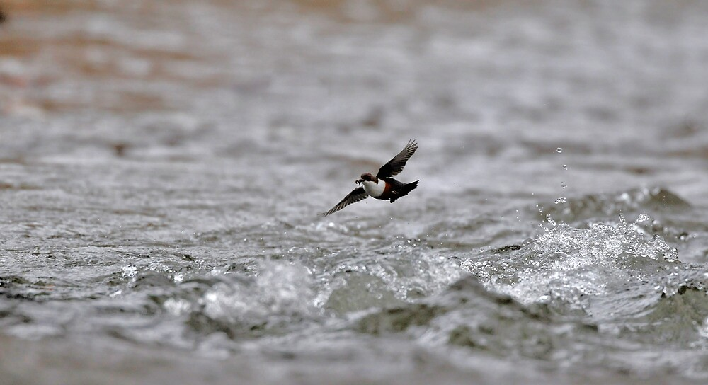 Dipper Over Rough Water by Tim Collier