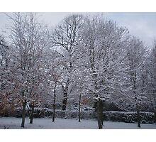 Snow laden trees Photographic Print