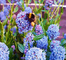 Bumble Bee Heavy With Pollen  by Debbie Westerman