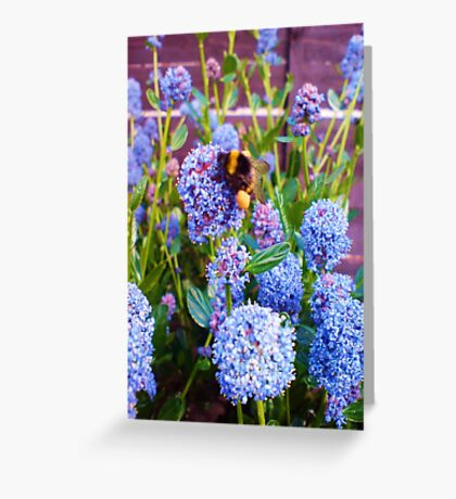 Bumble Bee Heavy With Pollen  Greeting Card