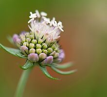 Beginning to Bloom  by Sarah-fiona Helme