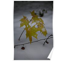 Sapling in the snow Poster