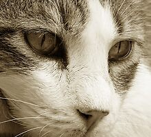 cat01_sepia_colour by perone