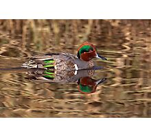 Green Winged Teal Reflections Photographic Print