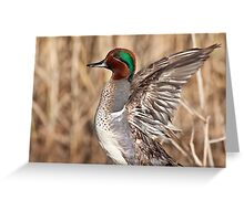 Green Winged Teal Wing Stretch Greeting Card