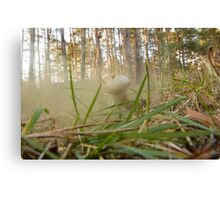 Mushroom In A Forest Canvas Print