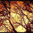 fire tree by Lady  Dezine