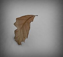 Lone Snow Leaf by jonnygatt
