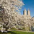 Central Park in Spring by Ellen McKnight