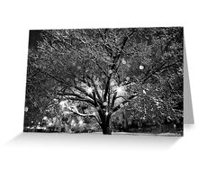 Shimmering Ice Tree Greeting Card