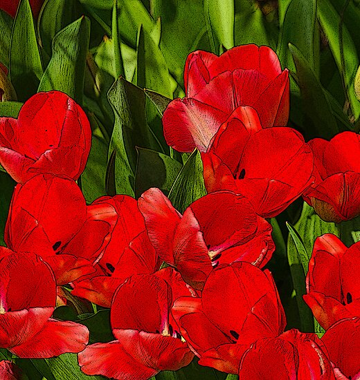 The Joy Of Red Tulips! by Diane Schuster
