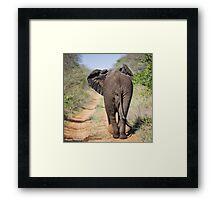 Elephant Phinda Vlei Framed Print