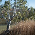 Morning on the  Murray by Robert Armitage