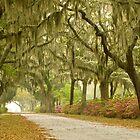 Live Oak Trees by Ellen McKnight