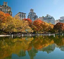 Fifth Avenue Reflections by Ellen McKnight