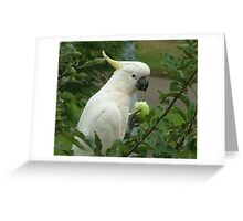 White Cockatoo in an Apple Tree Greeting Card