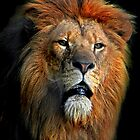 African Lion by Tarrby