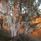 Early Morning On The Murray by Robert Armitage