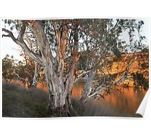 Early Morning On The Murray Poster