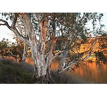 Early Morning On The Murray Photographic Print