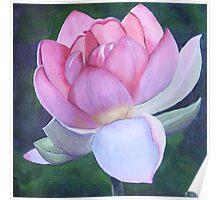 Lotus - rebirth Poster